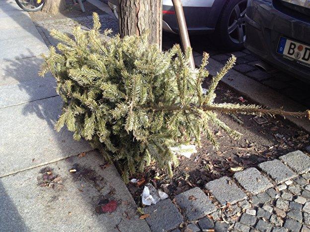 Weihnachtsbaum Service.Entdecker Service Für Liegengebliebene Weihnachtsbäume Weihnachten