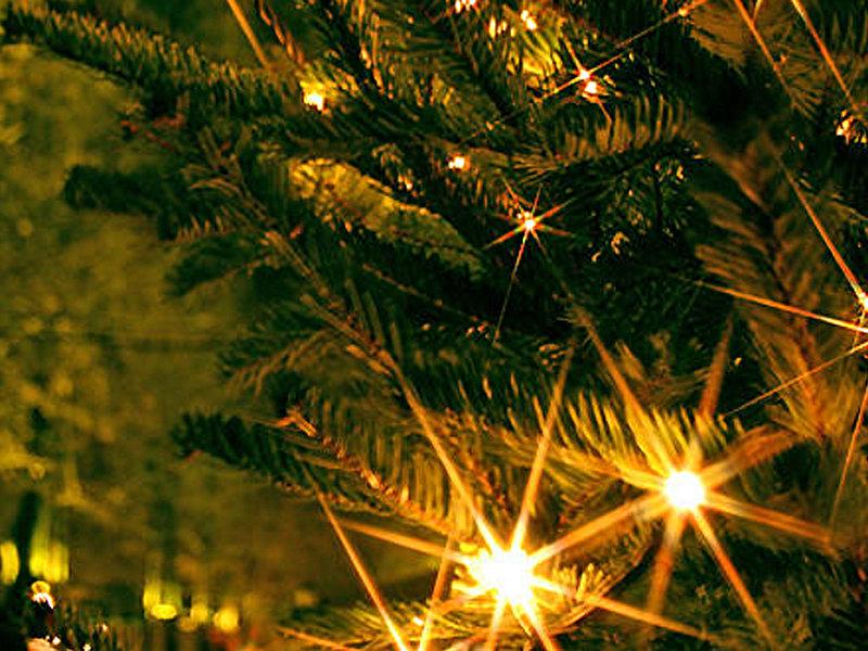 weihnachtsbäume selber schneiden grüntal