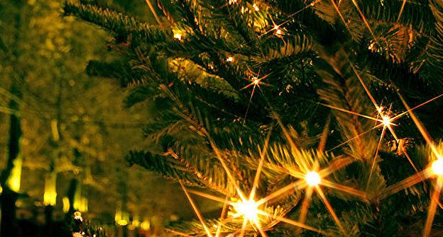Tannenbaum Selber Schlagen.Weihnachtsbaume Selber Schlagen Adressen Weihnachten In